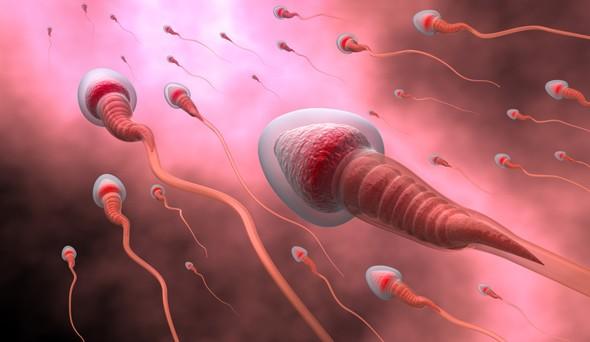 vse-o-spermotozoidah